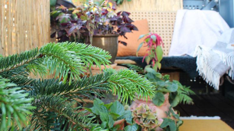 altan efterår altan vinter vinterklar altan